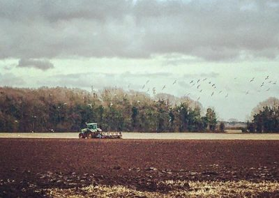 A tractor ploughing a field being followed by a flock of birds