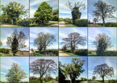 twelve individual shots of trees in a grid