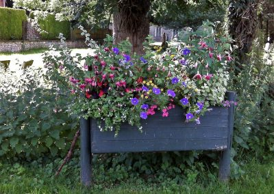 Fuchsias and cornflowers in a roadside planter
