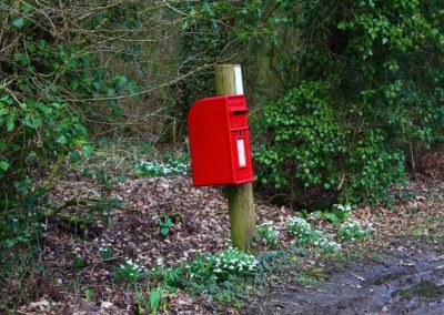 A red post box on a wooden post beside woodland