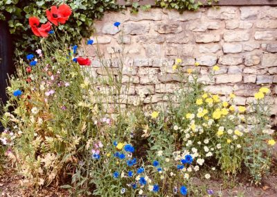 Poppies and blue and yellow cornflowers against a stone wall
